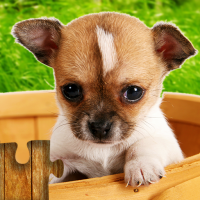 Download Dogs Jigsaw Puzzles Game – For Kids & Adults 🐶 25.1 APK MOD (Unlimited Everything)