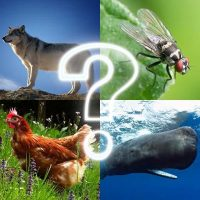 Download 🐷 Zoo sounds quiz 🐷 4.8 APK PRO (Unlimited Everything)